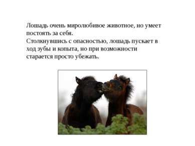 Лошадь очень миролюбивое животное, но умеет постоять за себя. Столкнувшись с ...