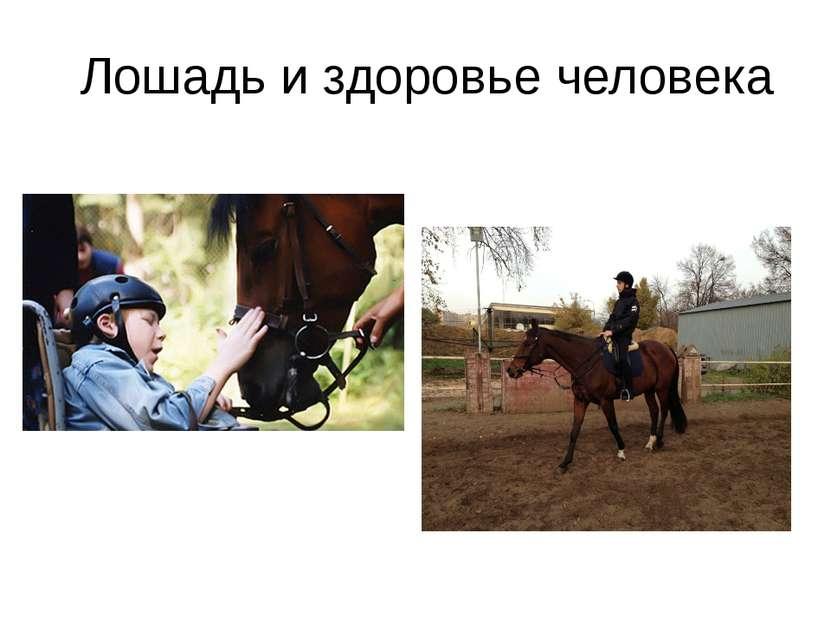 Лошадь и здоровье человека
