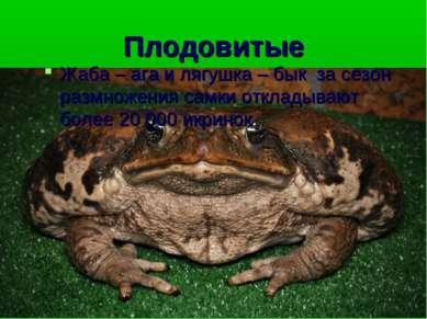 Плодовитые Жаба – ага и лягушка – бык за сезон размножения самки откладывают ...