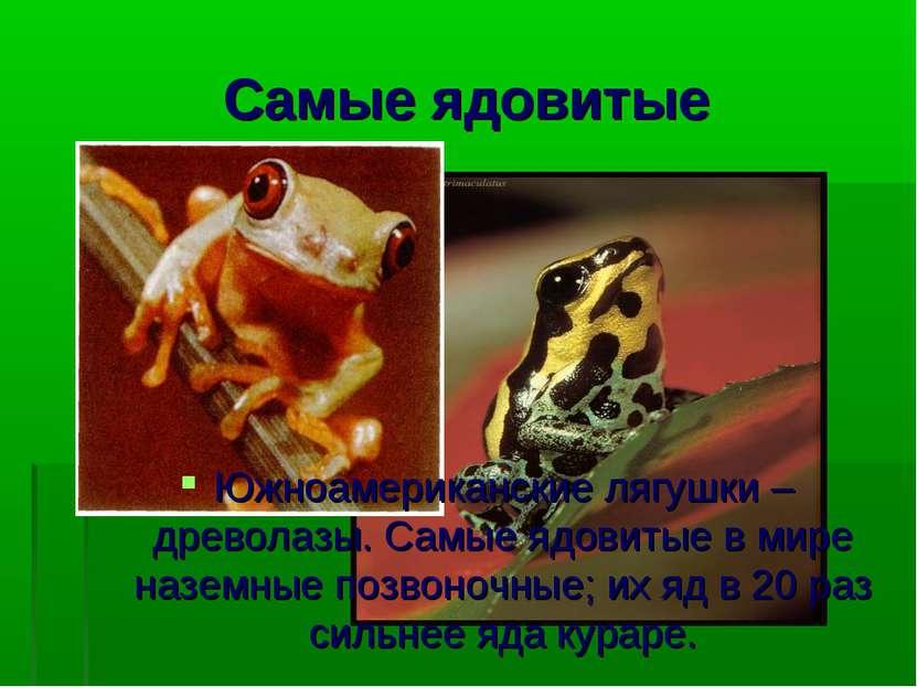 Самые ядовитые Южноамериканские лягушки – древолазы. Самые ядовитые в мире на...