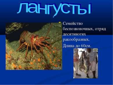 Семейство беспозвоночных, отряд десятиногих ракообразных. Длина до 60см.