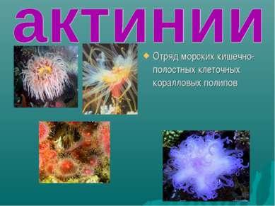 Отряд морских кишечно-полостных клеточных коралловых полипов