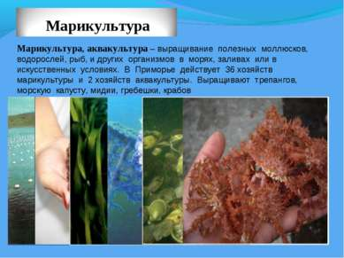 Марикультура, аквакультура – выращивание полезных моллюсков, водорослей, рыб,...