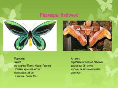 Размеры бабочек Аттакус В размахе крыльев бабочка достигает 25- 30 см , издал...