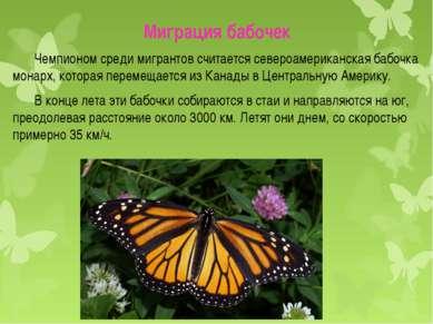 Миграция бабочек Чемпионом среди мигрантов считается североамериканская бабоч...