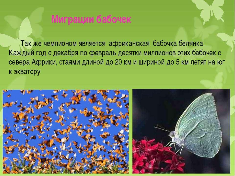 Миграции бабочек Так же чемпионом является африканская бабочка белянка. Кажды...