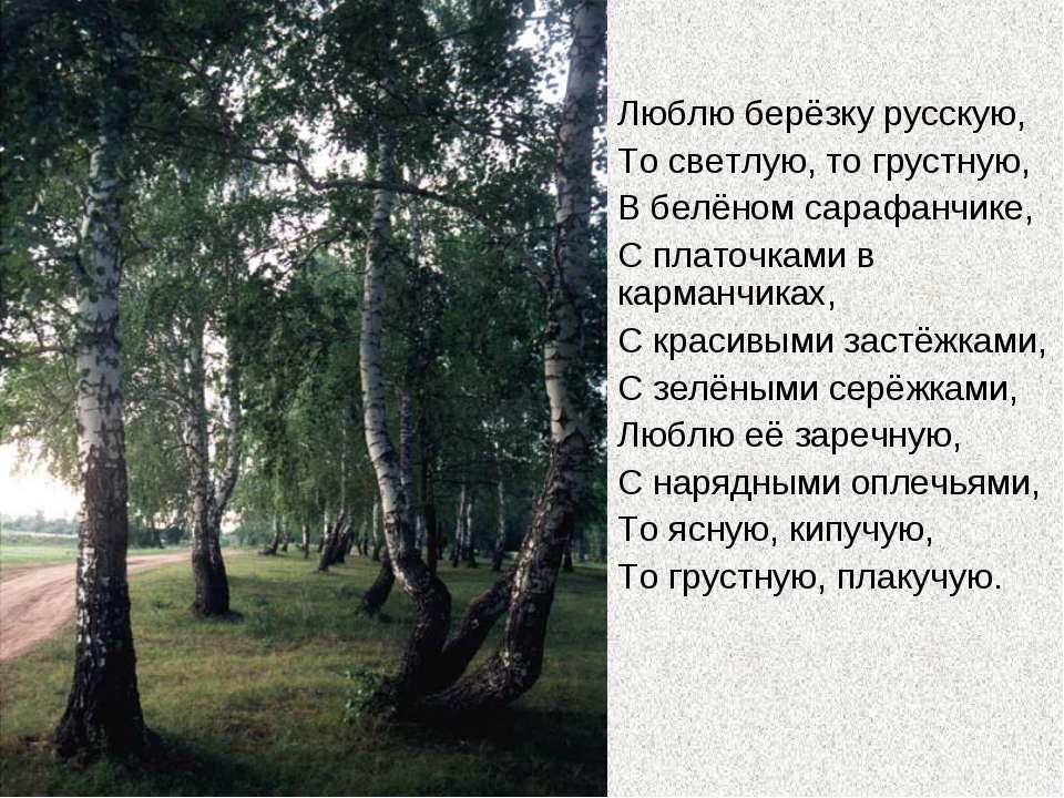 Люблю берёзку русскую, То светлую, то грустную, В белёном сарафанчике, С плат...