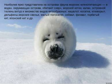 Наиболее ярко представлена на островах фауна морских млекопитающих— в водах,...