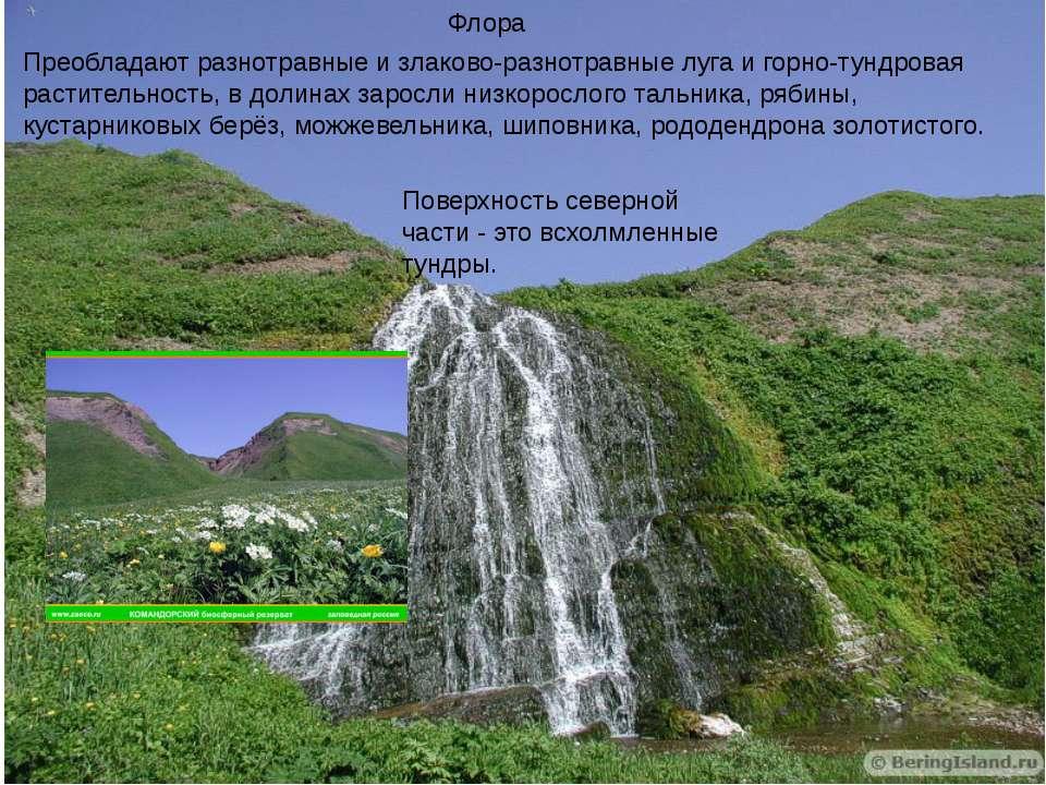 Флора Преобладают разнотравные и злаково-разнотравные луга и горно-тундровая ...