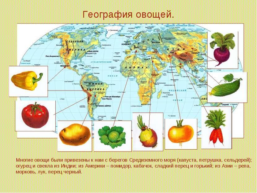 География овощей. Многие овощи были привезены к нам с берегов Средиземного мо...