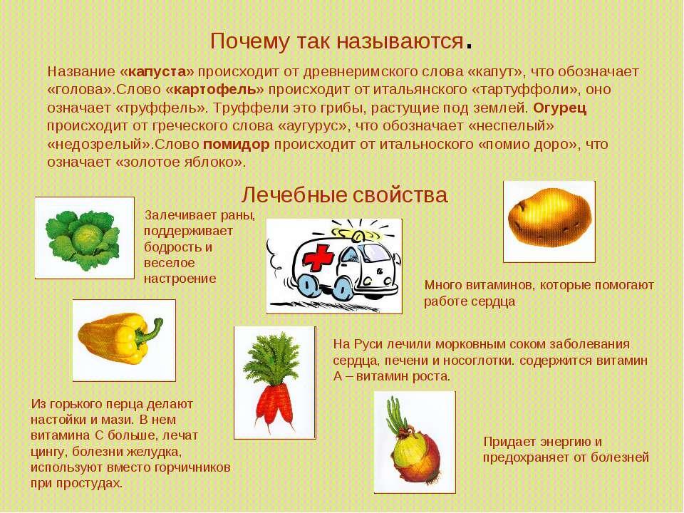 Почему так называются. Название «капуста» происходит от древнеримского слова ...