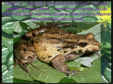 Ужасный листолаз — маленькая лягушка из рода листолазов семейства древолазов ...