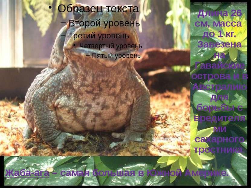 Обыкновенный тритон Редкий или малочисленный вид по периферии области