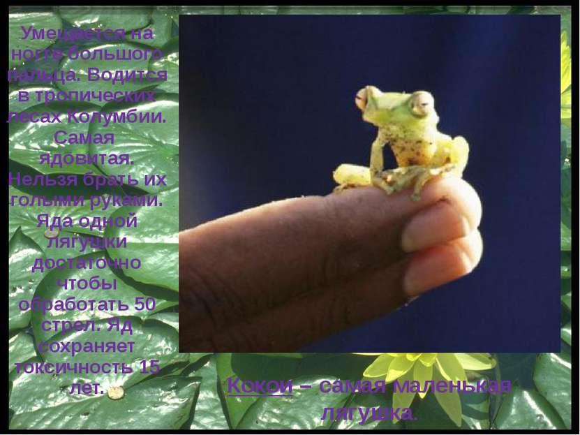 Многообразие земноводных Яванская летающая лягушка
