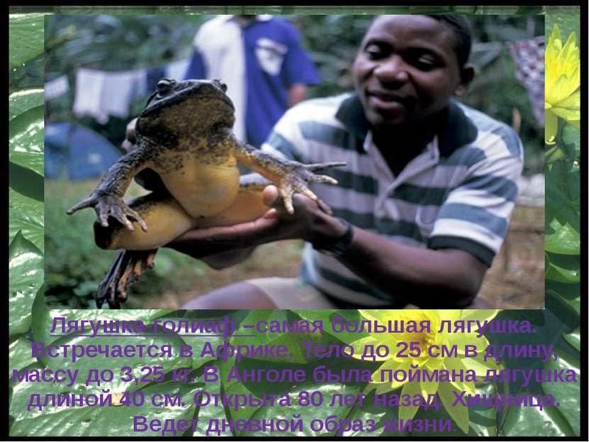 Ну, кто, говорит, что лягушки - уроды! Он должен, наверно себе уяснить: Закон...