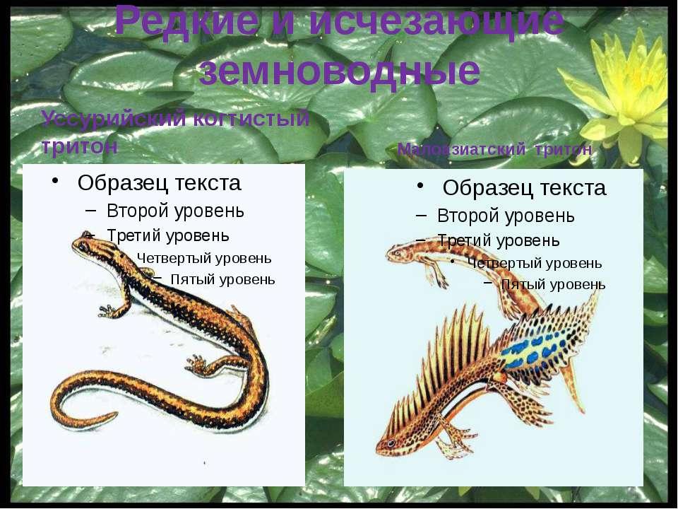 Красная Книга Свердловской области