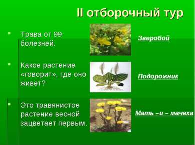 II отборочный тур Трава от 99 болезней. Какое растение «говорит», где оно жив...