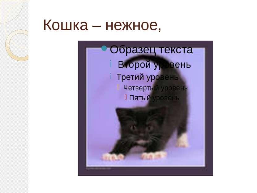 Кошка – нежное,