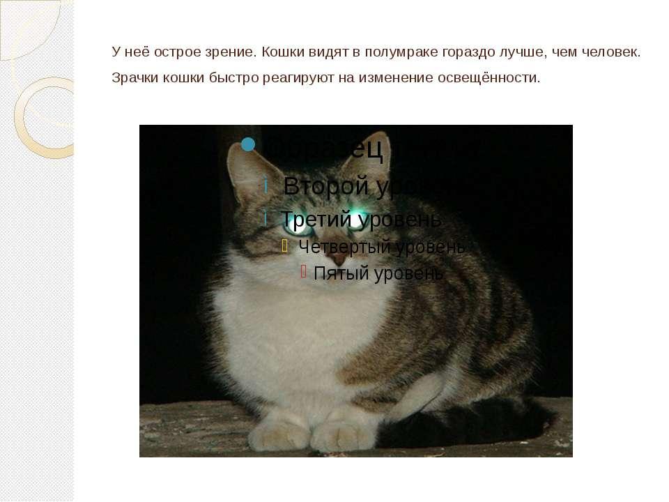 У неё острое зрение. Кошки видят в полумраке гораздо лучше, чем человек. Зрач...