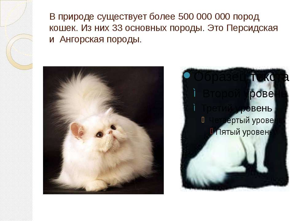 В природе существует более 500 000 000 пород кошек. Из них 33 основных породы...