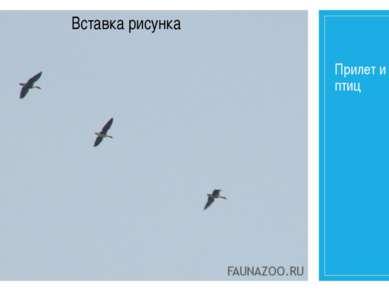 Прилет и отлет птиц