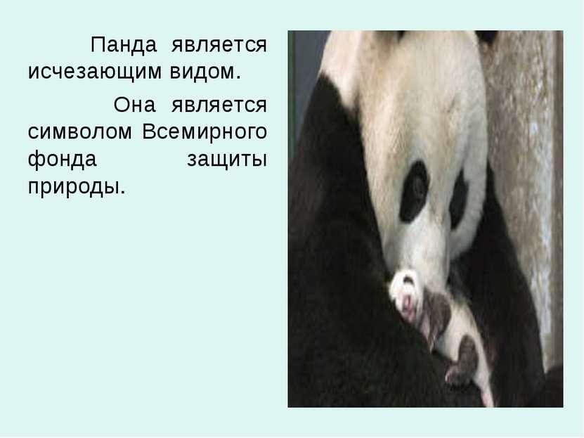 Панда является исчезающим видом. Она является символом Всемирного фонда защит...