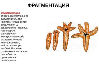 ФРАГМЕНТАЦИЯ Фрагментация - способ вегетативного размножения, при котором нов...