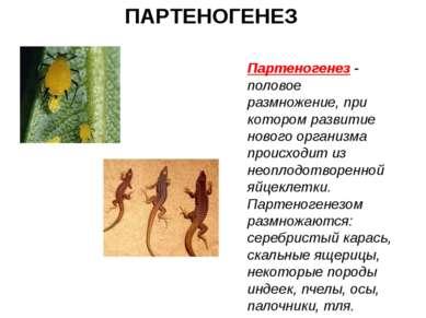 ПАРТЕНОГЕНЕЗ Партеногенез - половое размножение, при котором развитие нового ...