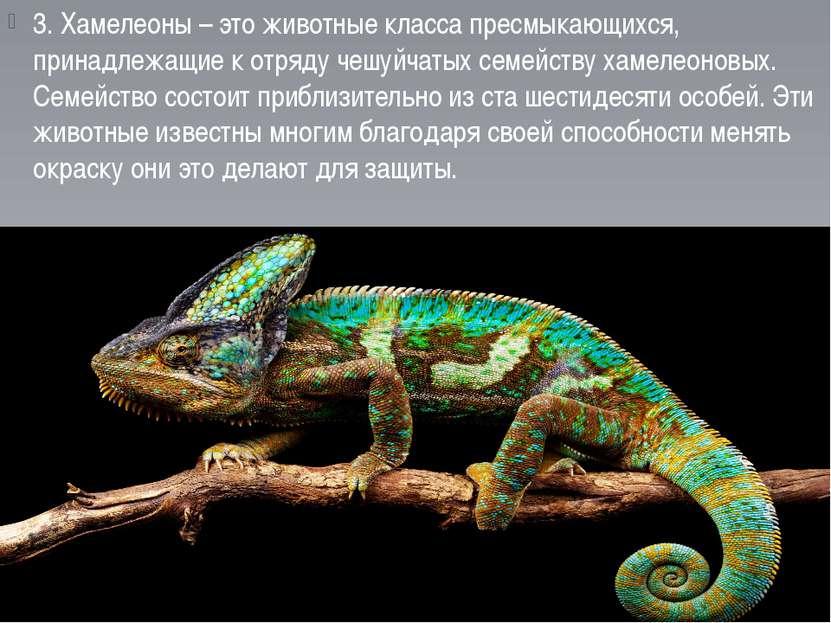 3. Хамелеоны – это животные класса пресмыкающихся, принадлежащие к отряду чеш...