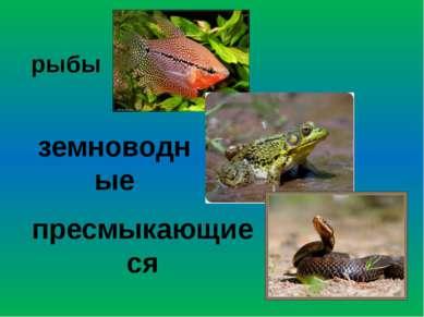 рыбы земноводные пресмыкающиеся