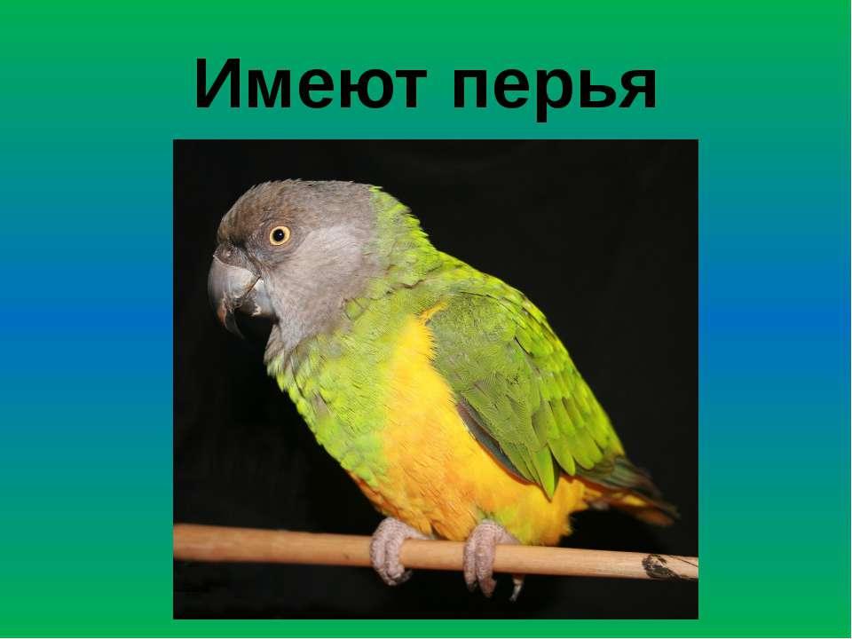 Имеют перья