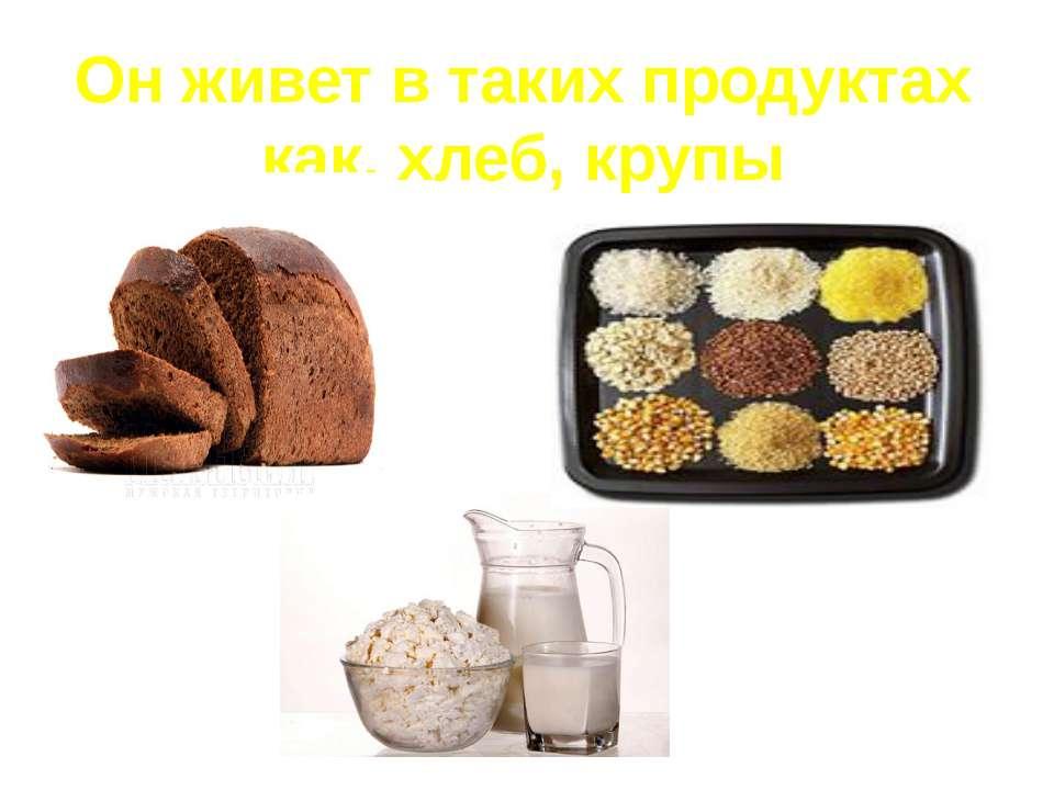 Он живет в таких продуктах как, хлеб, крупы