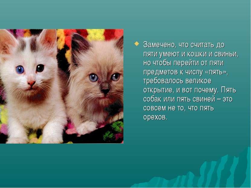 Замечено, что считать до пяти умеют и кошки и свиньи, но чтобы перейти от пят...
