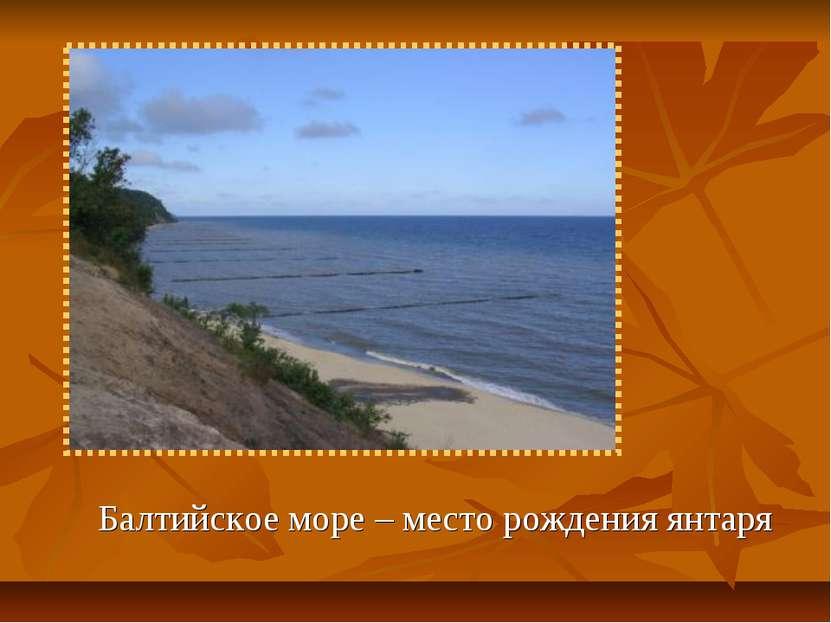 Балтийское море – место рождения янтаря