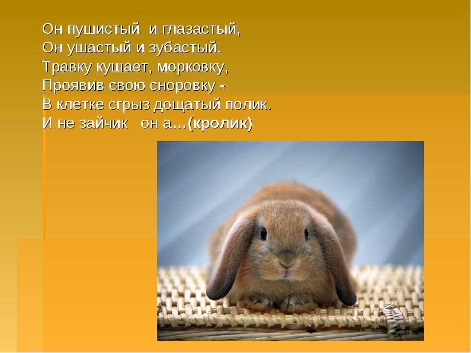 Он пушистый и глазастый, Он ушастый и зубастый. Травку кушает, морковку, Про...
