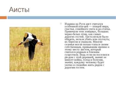 Аисты Издавна на Руси аист считался особенной пти цей — птицей мира, счастья,...