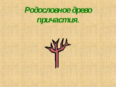 Родословное древо причастия.