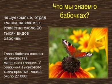 Что мы знаем о бабочках? чешуекрылые, отряд класса насекомых. Известно около ...