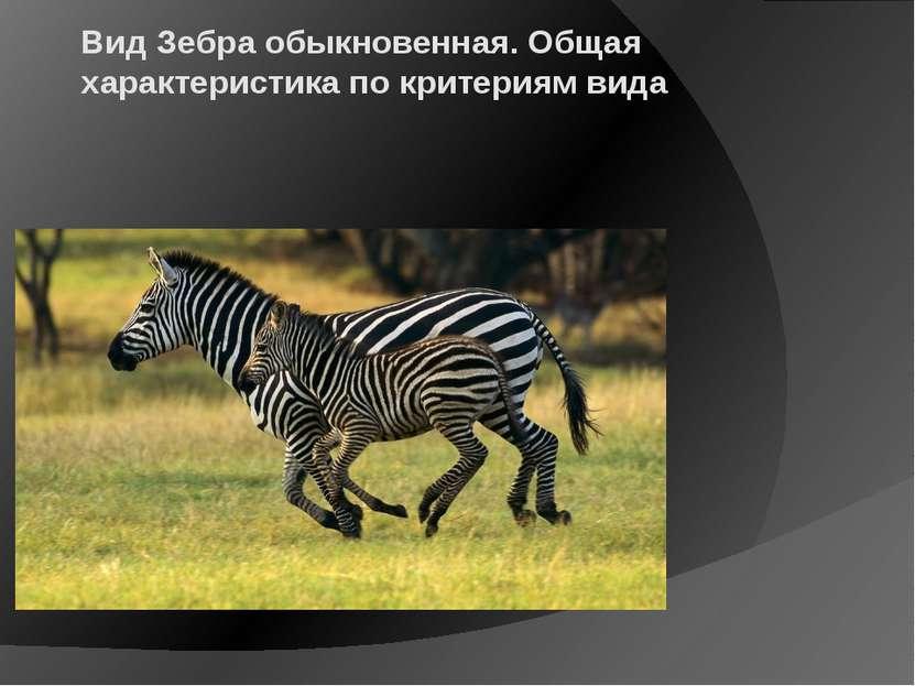 Вид Зебра обыкновенная. Общая характеристика по критериям вида