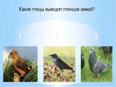 Какие птицы выводят птенцов зимой? 1 2 3