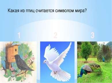 Какая из птиц считается символом мира? 1 2 3