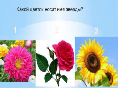 Какой цветок носит имя звезды? 1 2 3