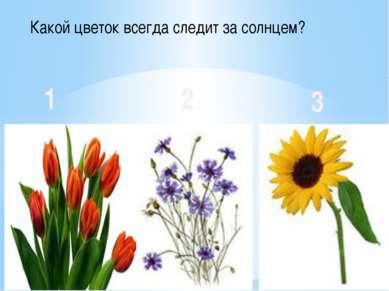 Какой цветок всегда следит за солнцем? 1 2 3