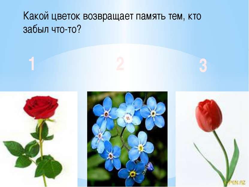 Какой цветок возвращает память тем, кто забыл что-то? 1 2 3