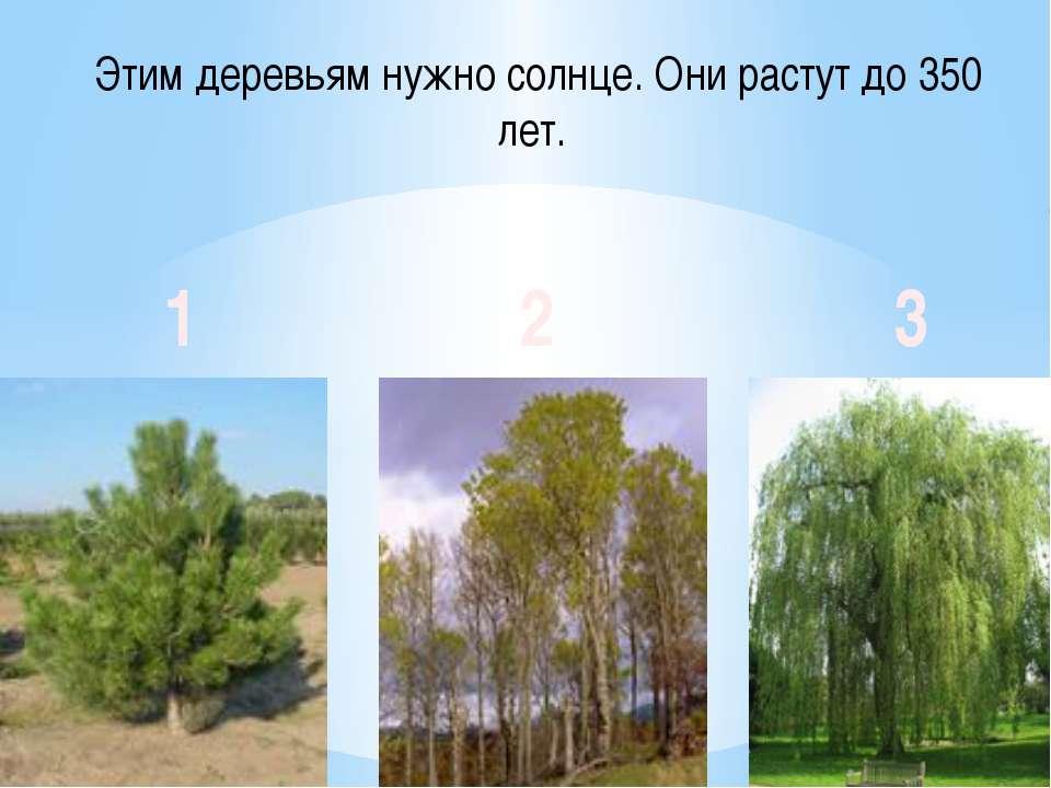 Этим деревьям нужно солнце. Они растут до 350 лет. 1 2 3