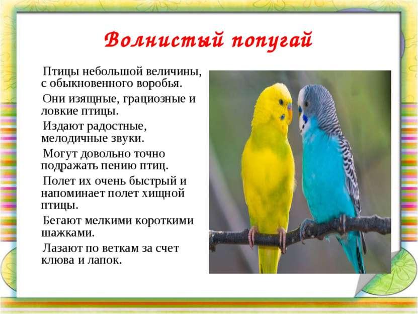 Волнистый попугай Птицы небольшой величины, с обыкновенного воробья. Они изящ...