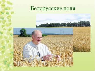 Белорусские поля