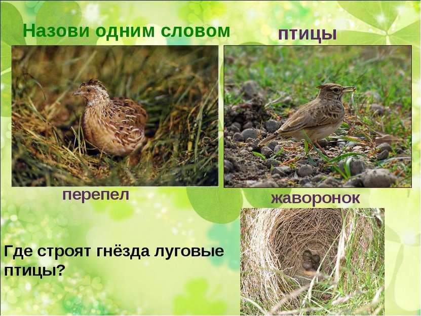 Назови одним словом птицы перепел жаворонок Где строят гнёзда луговые птицы?