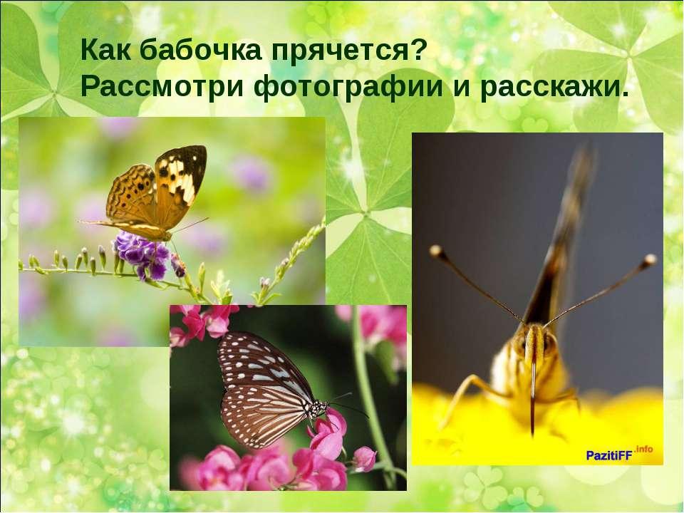 Как бабочка прячется? Рассмотри фотографии и расскажи.
