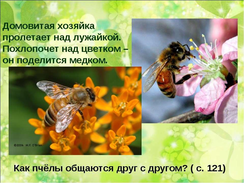 Домовитая хозяйка пролетает над лужайкой. Похлопочет над цветком – он поделит...